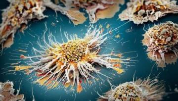 Клетки кожи превратили в иммунные клетки